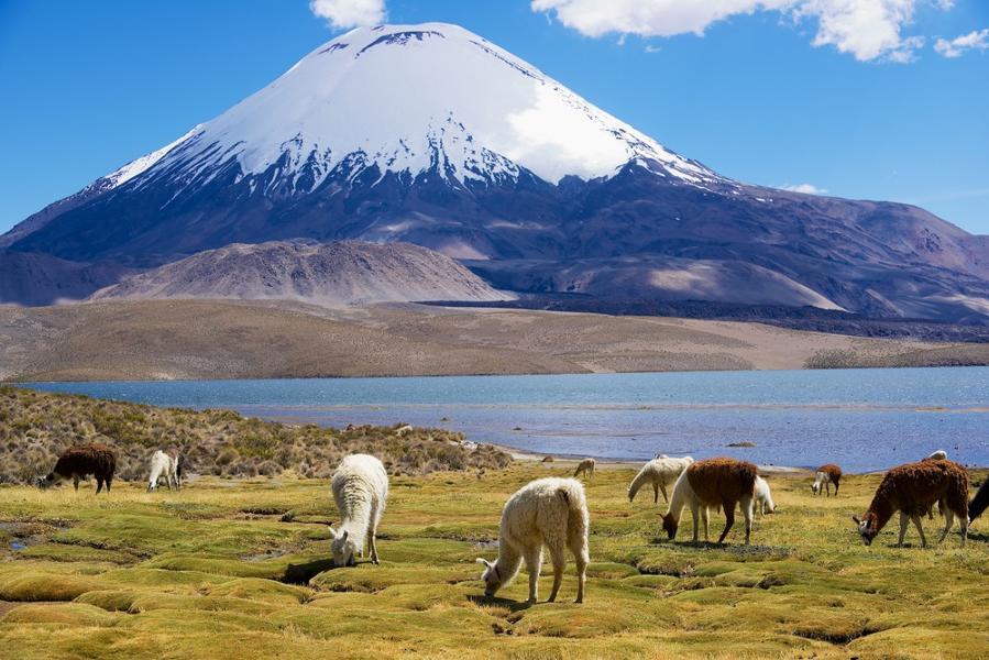 Que voir dans la région d'Arica au nord du Chili ?